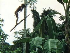Yanomamo Series