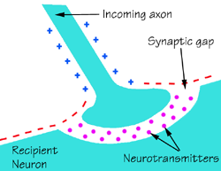File:Synapse.png