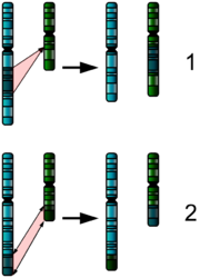 Two Chromosome Mutations