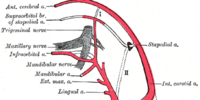 Common carotid artery