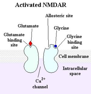 Activated NMDAR