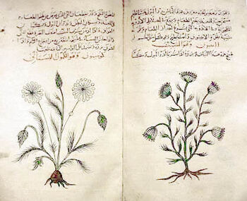 Arabic herbal medicine guidebook