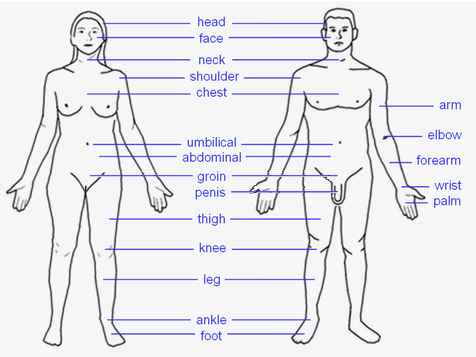 File:Human body features.png