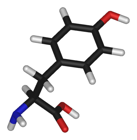 File:L-tyrosine-3D-sticks.png