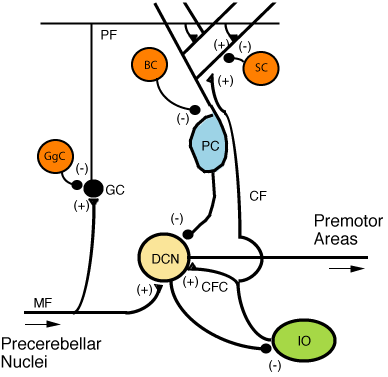 File:CerebCircuit.png
