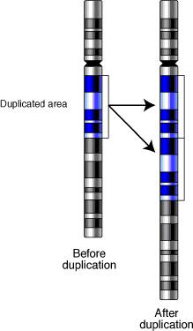 Gene-duplication