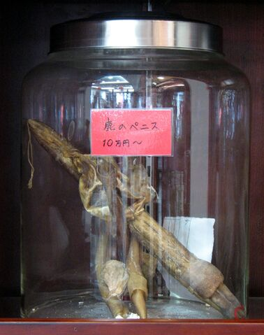File:Yokohama Chinese Medicine Deer Penis.jpg