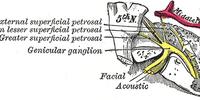 Greater petrosal nerve