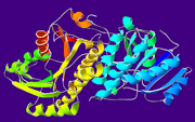 AlcoholDehydrogenase-1A4U