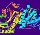 Alcohol dehydrogenases
