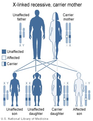 genetic problems of the cousin marriages sociology essay Parental responses to consanguinity and genetic disease in saudi arabia some families adopted a cautious approach to cousin marriages and future births while mendelian inher- the genetic problem.