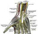 Anterior interosseous nerve
