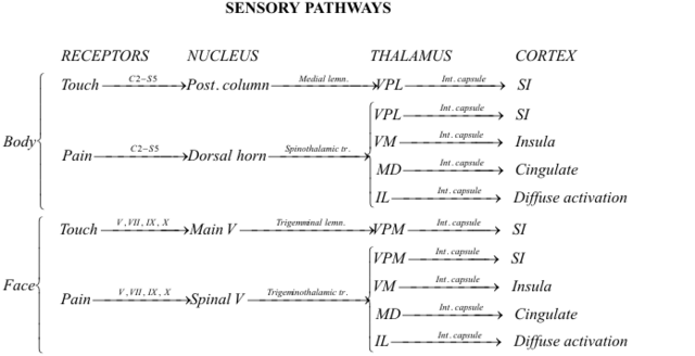 File:Touch Pain Pathways.png