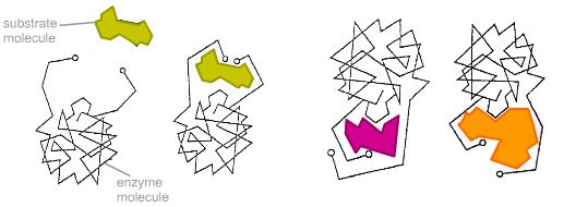 File:Two substrates c.png
