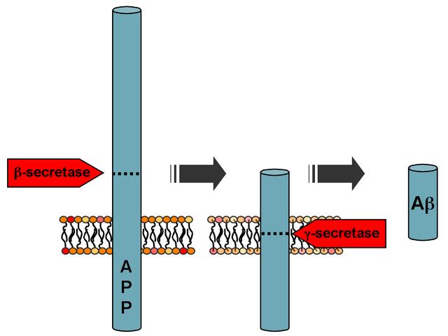 File:APP processing.png