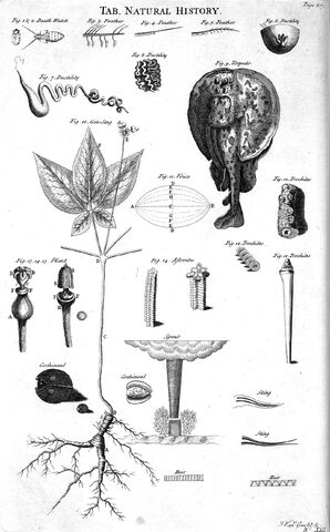 File:Table of Natural History, Cyclopaedia, Volume 2.jpg