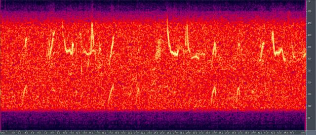 File:Humpback song spectrogram.png