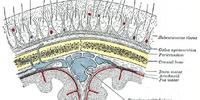 Scalp (anatomy)