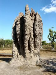 Termite Cathedral DSC03570