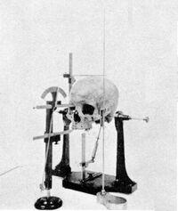 Craniometry skull 1902