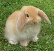 Bunny2-1-
