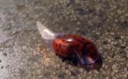 Ladybug2a6
