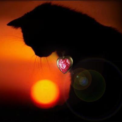 File:Petunia.jpg