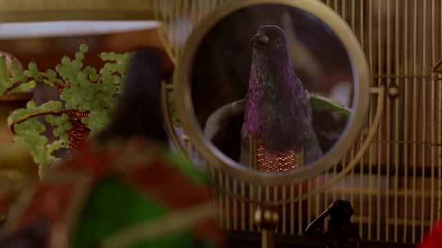 File:Pigeon 332.png