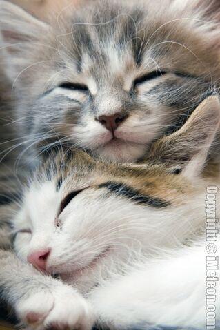 File:Sleeping kittens.jpg