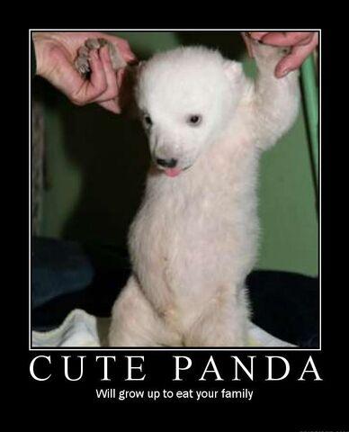File:Cute panda lol.jpg