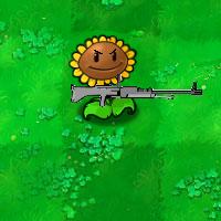 War Sunflower
