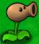 Oil Pea