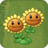 Twin Sunflower(2)