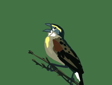 File:Yelling Bird.png