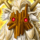 Tsutsunokami (Revelation of Prosperity) Icon