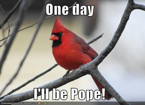 File:Funny-pictures-red-bird-pope.jpg