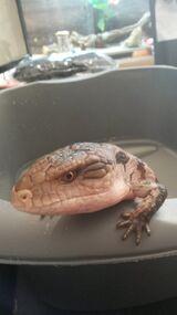 Grumpy Nyx