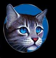 Jayfeather-warrior-cat-16180010-405-418