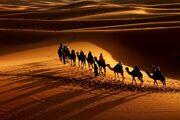 Caravan-in-the-Desert-010