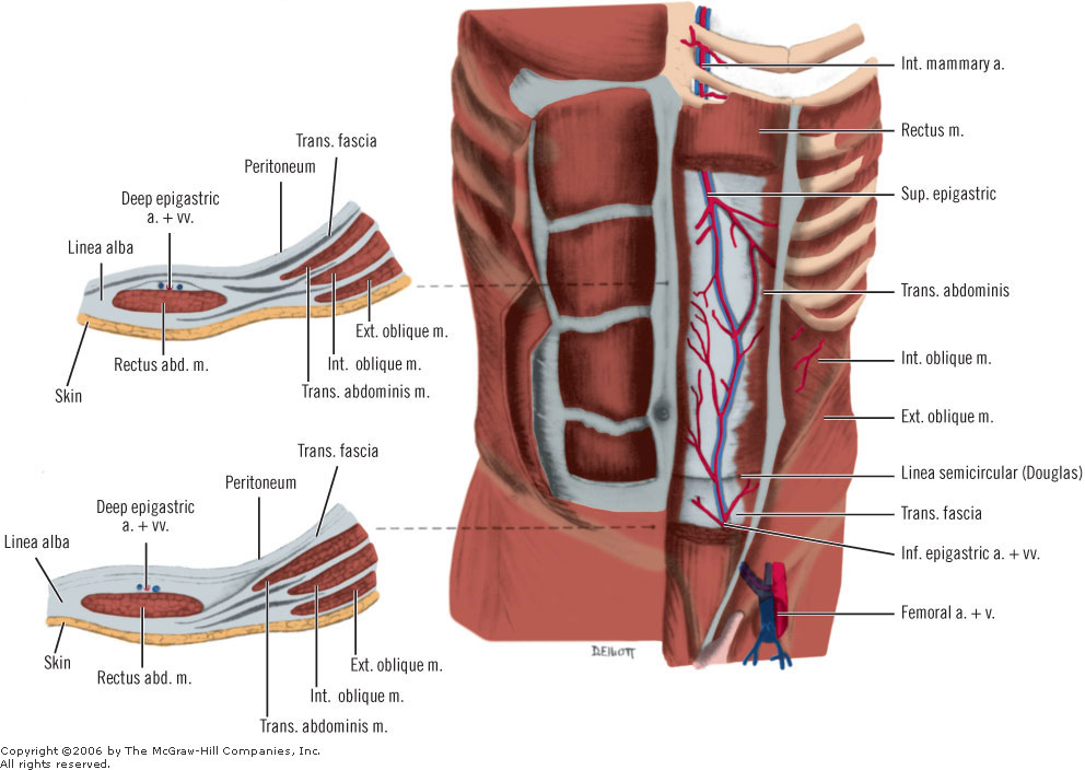 how to train rectus abdominis