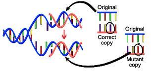 DNA Mutant