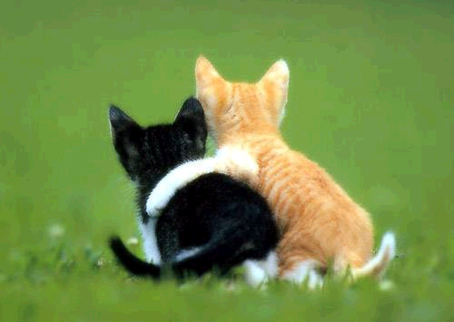 File:Friendship kittens.png