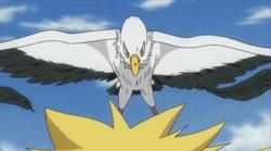 Falco2