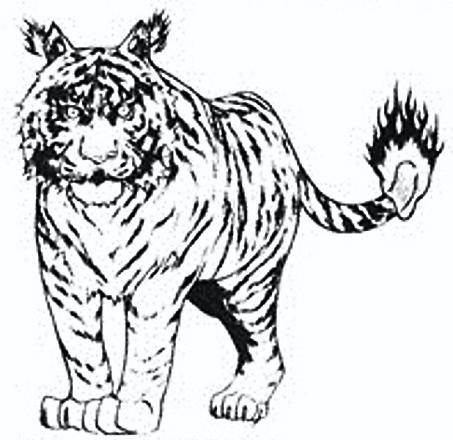 Tigre Tempesta