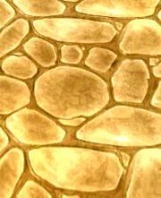 File:Tea-Colored Floor.jpg