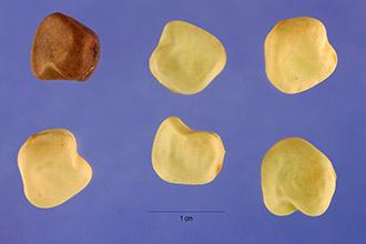 File:Indian peas.jpg
