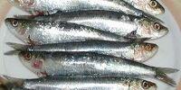 Sardines and pilchards