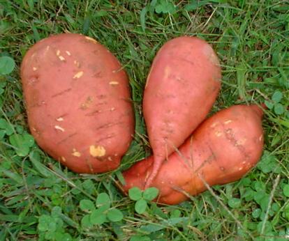 File:SweetPotatoes.jpg