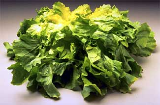 File:Escarole.jpg