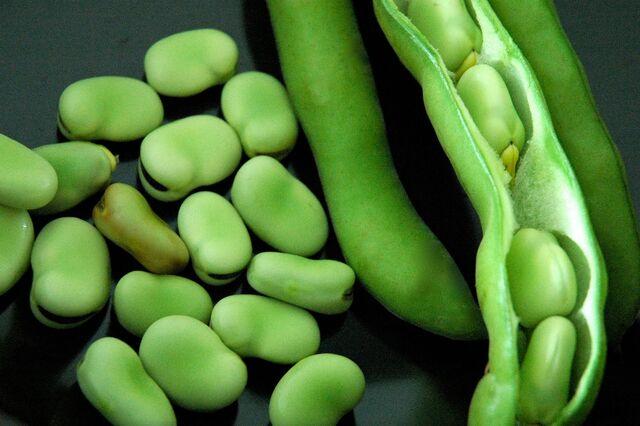 File:Fava beans.JPG